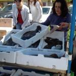 Fiskförsäljning i Terracina