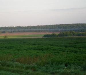 På väg till sjön strax efter klockan sex på morgonen. Dimman ligger som en sträng över fälten.