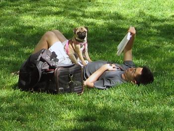 Hund + husse slappar i gräset