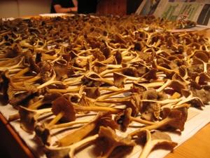 svampar i massor på tork