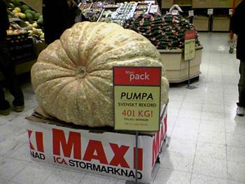 groteskt stor pumpa